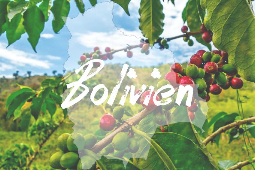 Kaffeeanbau in Bolivien