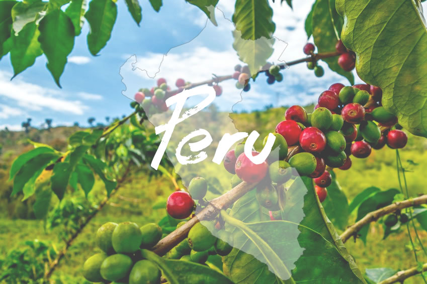 Kaffeeanbau und Handel in Peru
